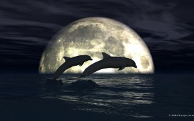 dolphins, moonlight, Дельфины , Del'finy , лунный свет, lunnyy svet